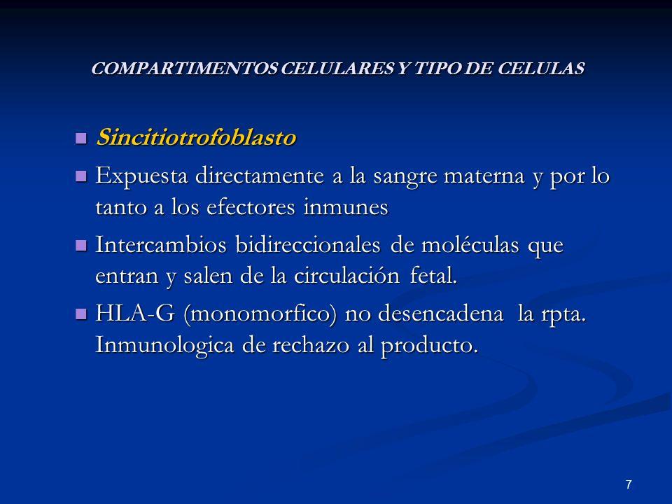 COMPARTIMENTOS CELULARES Y TIPO DE CELULAS Sincitiotrofoblasto Sincitiotrofoblasto Expuesta directamente a la sangre materna y por lo tanto a los efec