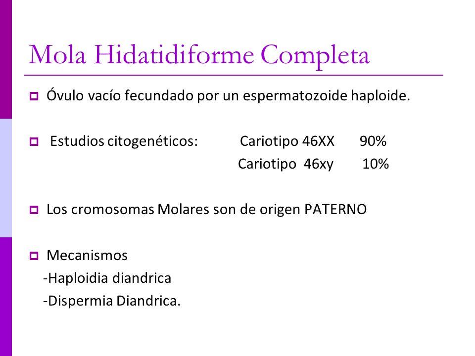 Mola Hidatidiforme Completa Óvulo vacío fecundado por un espermatozoide haploide. Estudios citogenéticos: Cariotipo 46XX 90% Cariotipo 46xy 10% Los cr