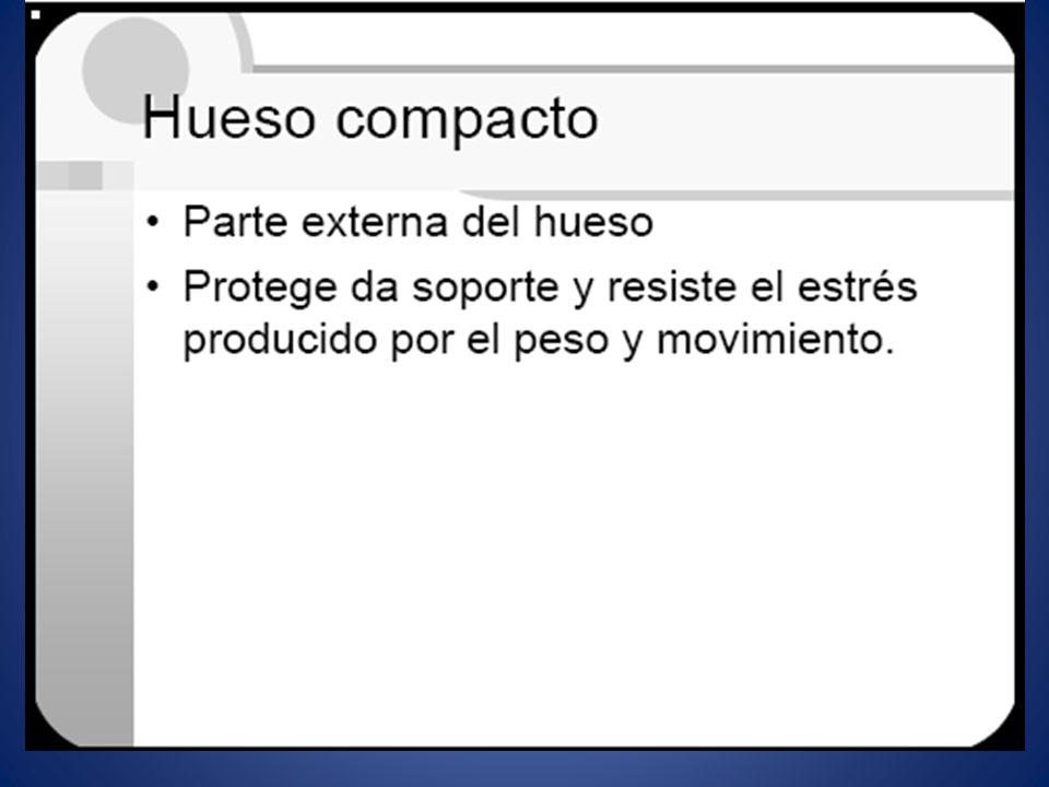 HUESO COMPACTO.