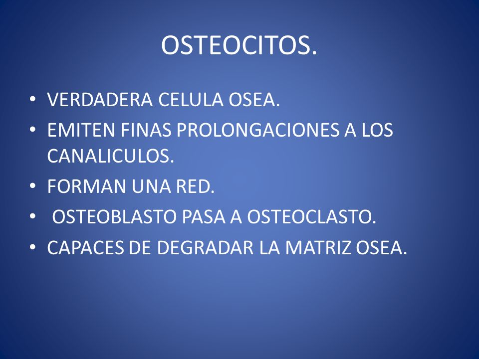 OSTEOCITOS. VERDADERA CELULA OSEA. EMITEN FINAS PROLONGACIONES A LOS CANALICULOS. FORMAN UNA RED. OSTEOBLASTO PASA A OSTEOCLASTO. CAPACES DE DEGRADAR