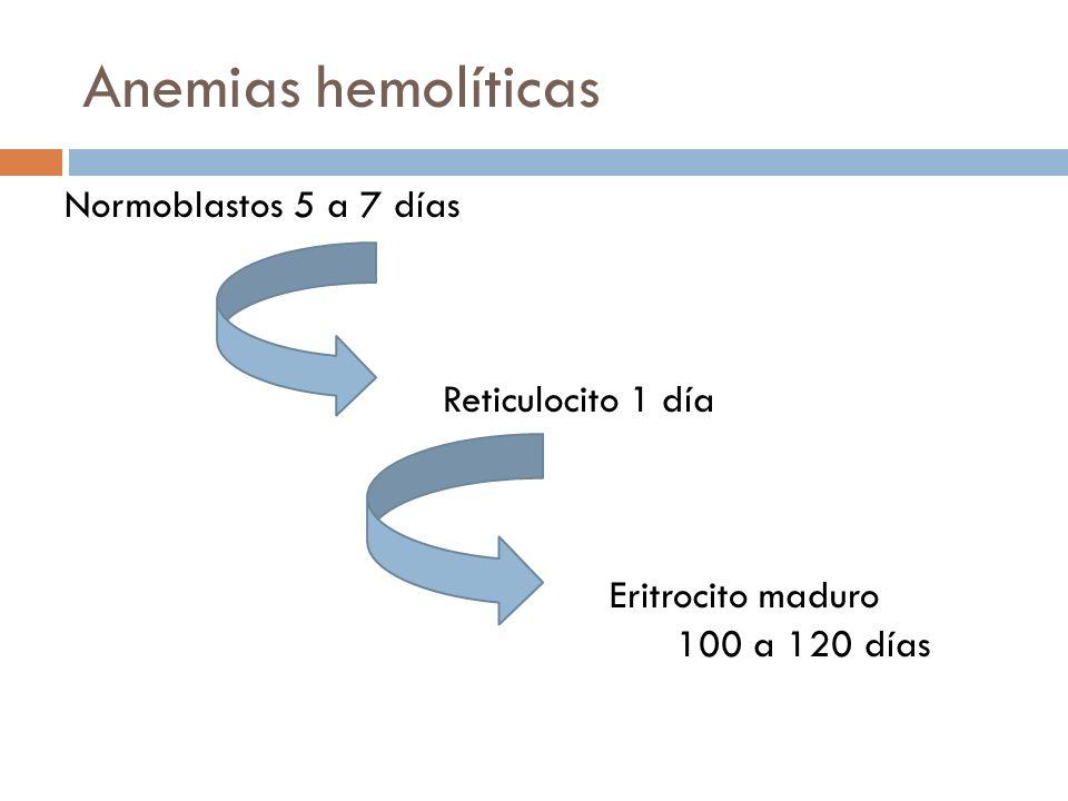 Anemias hemolíticas Normoblastos 5 a 7 días Reticulocito 1 día Eritrocito maduro 100 a 120 días
