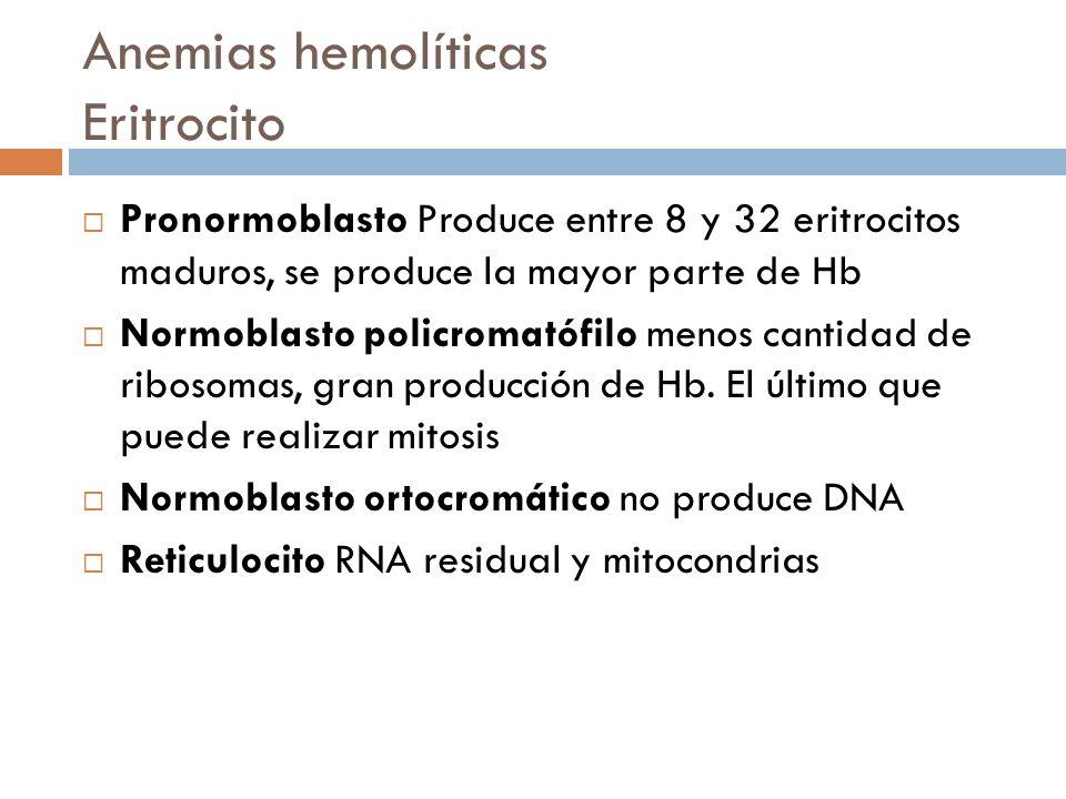 Anemias hemolíticas Eritrocito Pronormoblasto Produce entre 8 y 32 eritrocitos maduros, se produce la mayor parte de Hb Normoblasto policromatófilo me