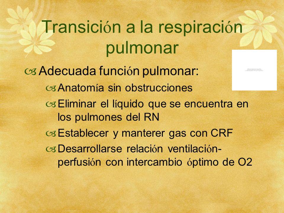 Transici ó n a la respiraci ó n pulmonar Adecuada funci ó n pulmonar: Anatom í a sin obstrucciones Eliminar el l í quido que se encuentra en los pulmo