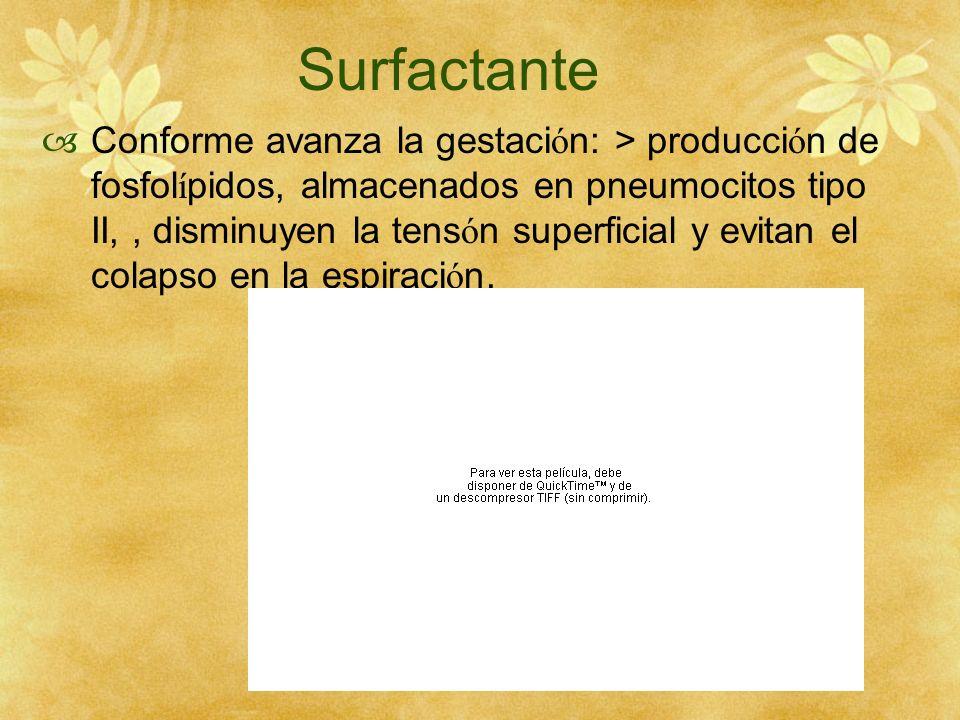Surfactante Conforme avanza la gestaci ó n: > producci ó n de fosfol í pidos, almacenados en pneumocitos tipo II,, disminuyen la tens ó n superficial