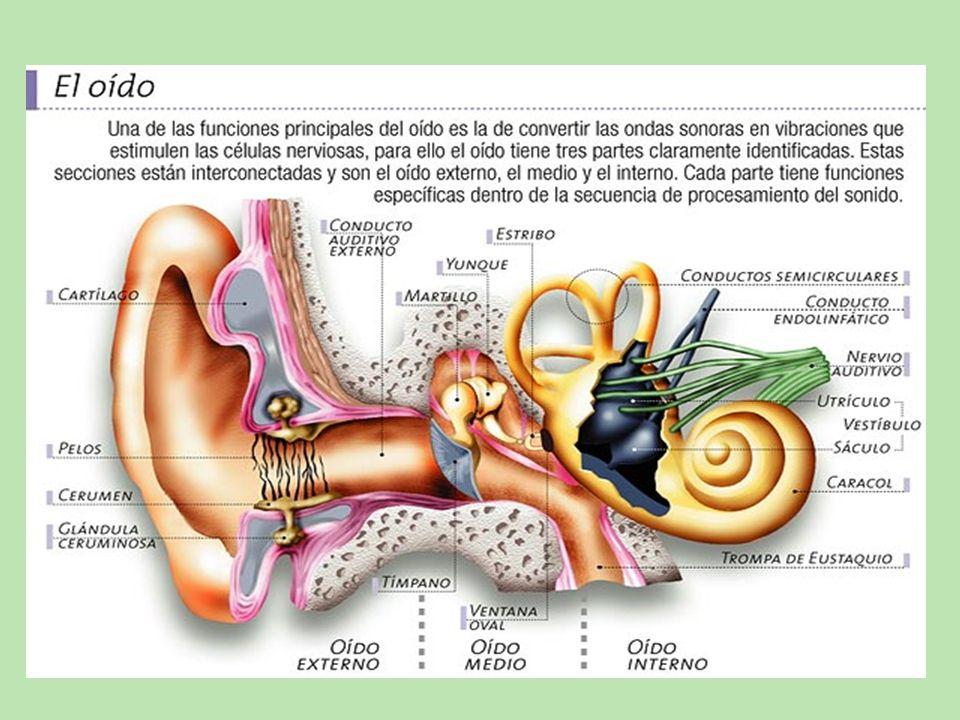 HIPOACUSIA LEVE Pérdida auditiva de entre 40 y 60 dB.
