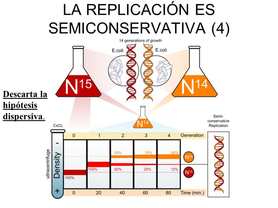 Nódulo de recombinación