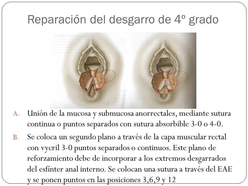 Reparación del desgarro de 4º grado A. Unión de la mucosa y submucosa anorrectales, mediante sutura continua o puntos separados con sutura absorbible