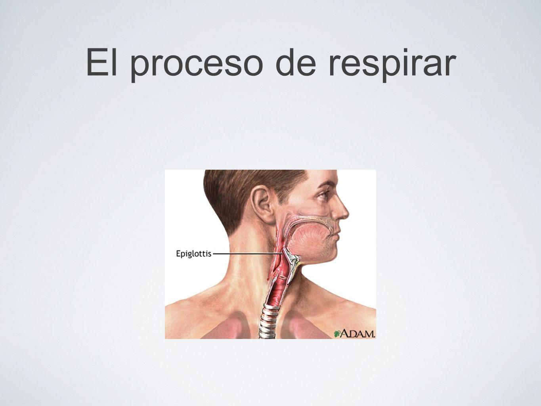 El proceso de respirar
