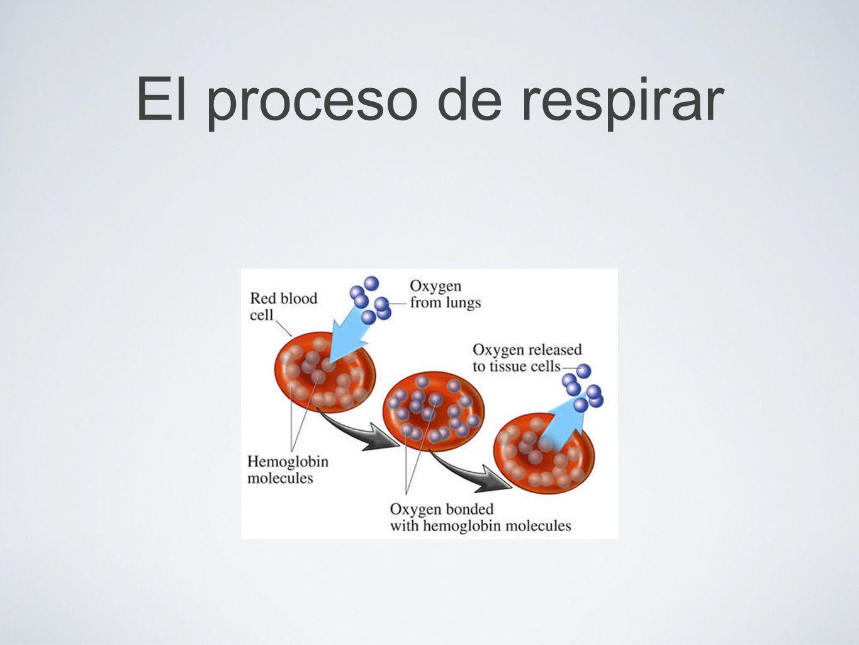 El proposito del aire fresco El cuerpo necesita respirar para que las celulas pueda quemar combustible (glucosa)