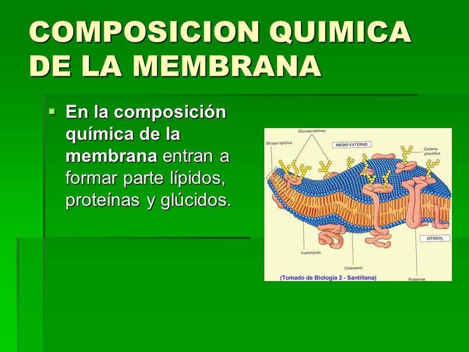 COMPOSICION QUIMICA DE LA MEMBRANA En la composición química de la membrana entran a formar parte lípidos, proteínas y glúcidos. En la composición quí