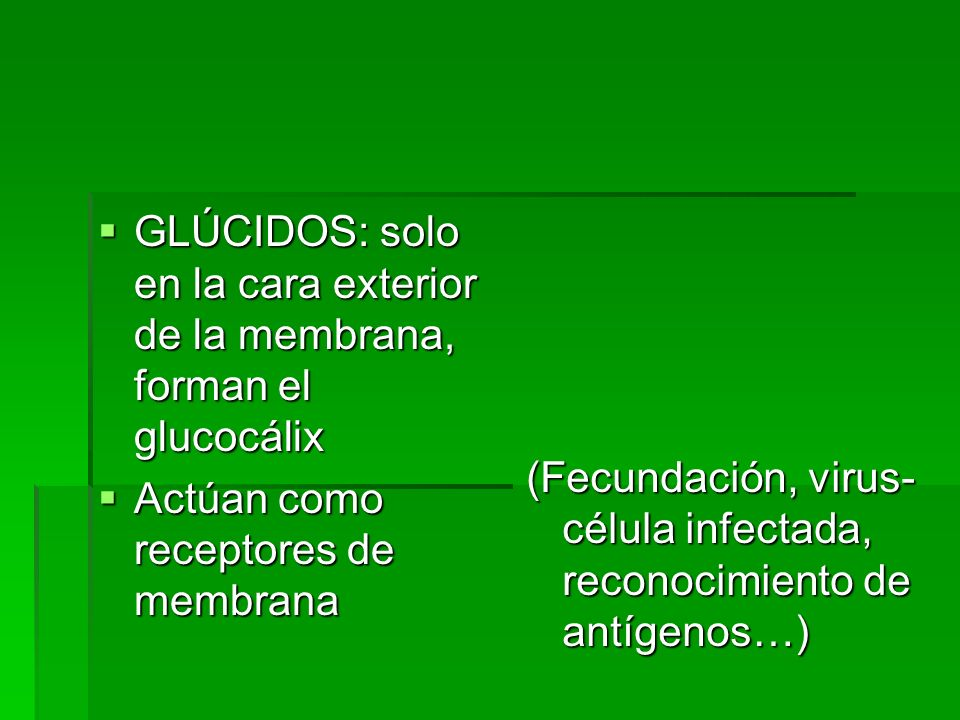 GLÚCIDOS: solo en la cara exterior de la membrana, forman el glucocálix GLÚCIDOS: solo en la cara exterior de la membrana, forman el glucocálix Actúan