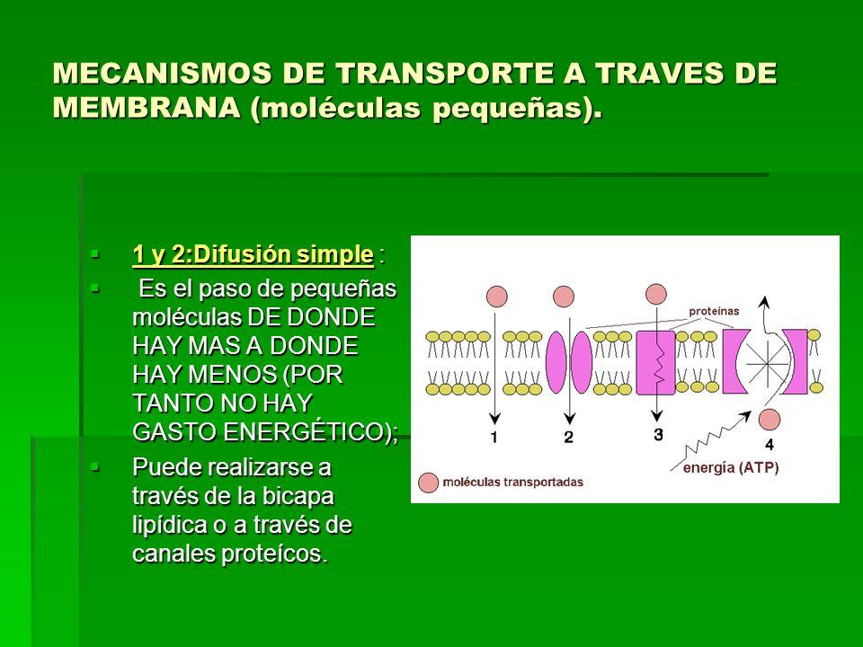 MECANISMOS DE TRANSPORTE A TRAVES DE MEMBRANA (moléculas pequeñas). 1 y 2:Difusión simple : 1 y 2:Difusión simple : Es el paso de pequeñas moléculas D