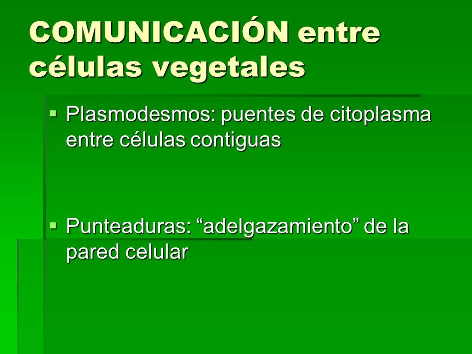 COMUNICACIÓN entre células vegetales Plasmodesmos: puentes de citoplasma entre células contiguas Plasmodesmos: puentes de citoplasma entre células con