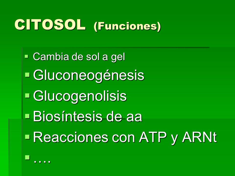 CITOSOL (Funciones) Cambia de sol a gel Cambia de sol a gel Gluconeogénesis Gluconeogénesis Glucogenolisis Glucogenolisis Biosíntesis de aa Biosíntesi