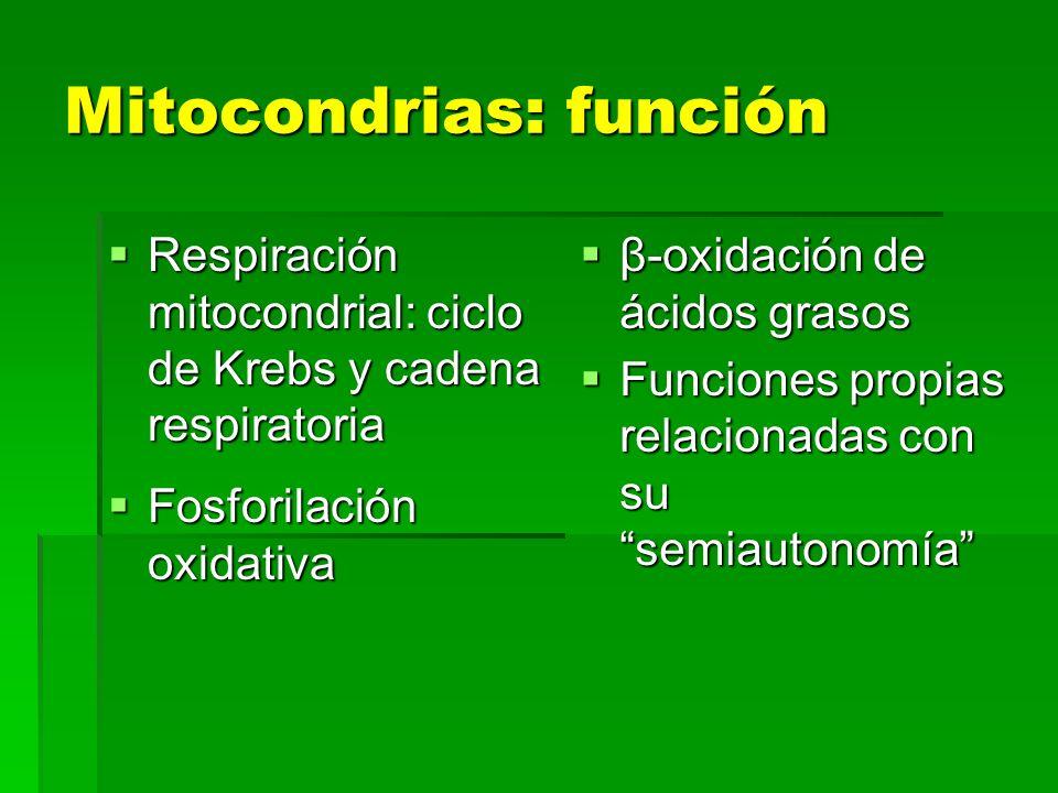 Mitocondrias: función Respiración mitocondrial: ciclo de Krebs y cadena respiratoria Respiración mitocondrial: ciclo de Krebs y cadena respiratoria Fo