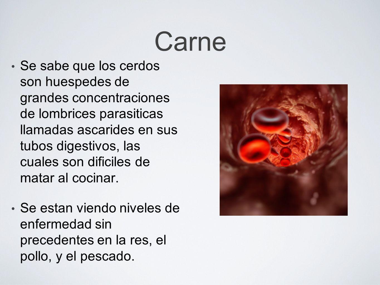 Carne Se sabe que los cerdos son huespedes de grandes concentraciones de lombrices parasiticas llamadas ascarides en sus tubos digestivos, las cuales
