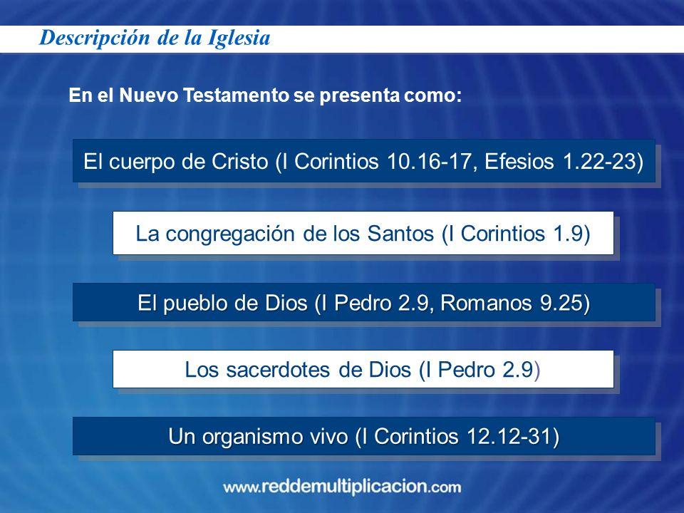 En el Nuevo Testamento se presenta como: El cuerpo de Cristo (I Corintios 10.16-17, Efesios 1.22-23) La congregación de los Santos (I Corintios 1.9) E