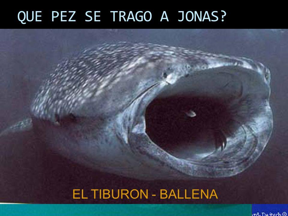 QUE PEZ SE TRAGO A JONAS? EL TIBURON - BALLENA