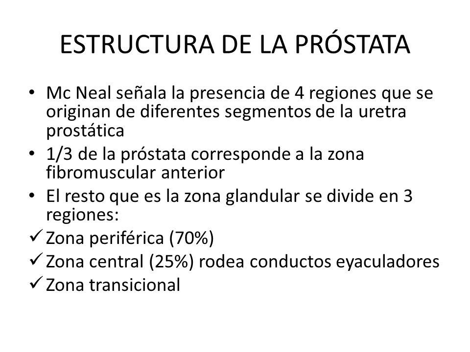 ESTRUCTURA DE LA PRÓSTATA Mc Neal señala la presencia de 4 regiones que se originan de diferentes segmentos de la uretra prostática 1/3 de la próstata