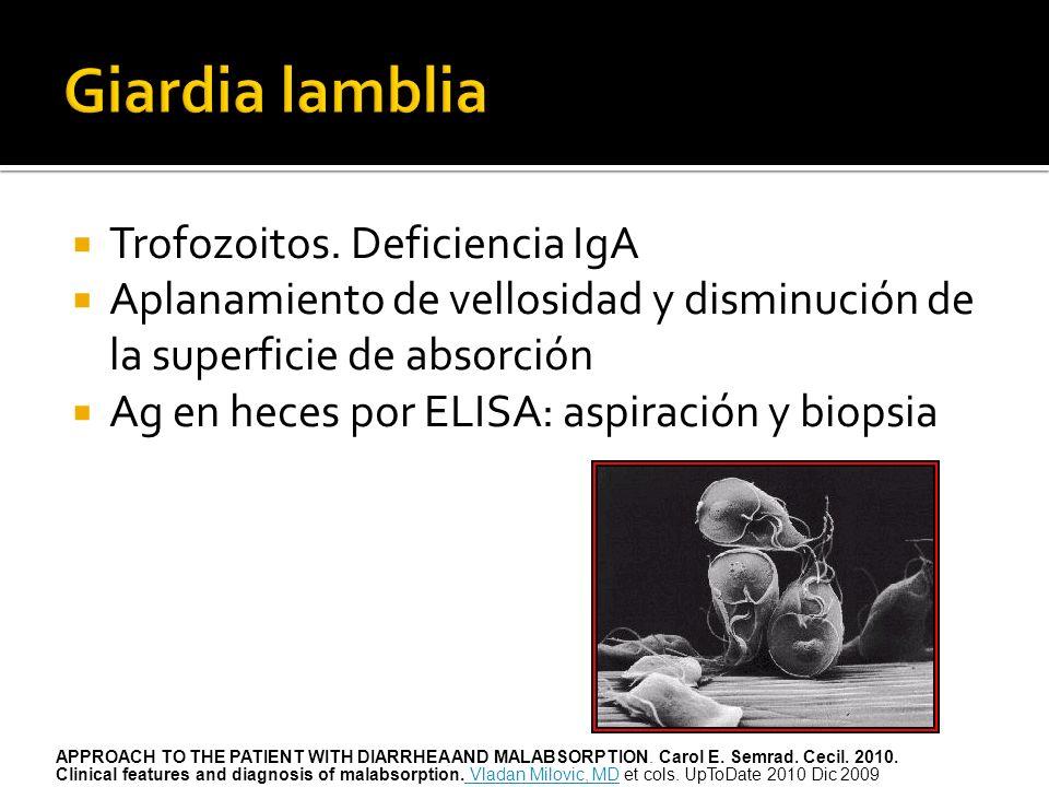Trofozoitos. Deficiencia IgA Aplanamiento de vellosidad y disminución de la superficie de absorción Ag en heces por ELISA: aspiración y biopsia APPROA