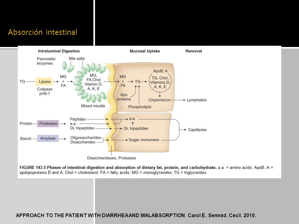 Absorción intestinal APPROACH TO THE PATIENT WITH DIARRHEA AND MALABSORPTION. Carol E. Semrad. Cecil. 2010.