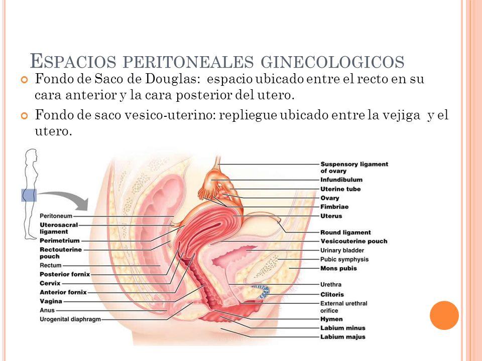 E SPACIOS PERITONEALES GINECOLOGICOS Fondo de Saco de Douglas: espacio ubicado entre el recto en su cara anterior y la cara posterior del utero. Fondo