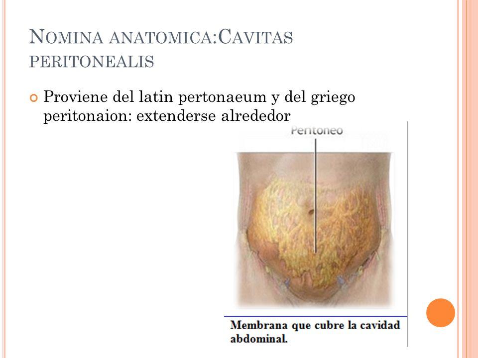 N OMINA ANATOMICA :C AVITAS PERITONEALIS Proviene del latin pertonaeum y del griego peritonaion: extenderse alrededor