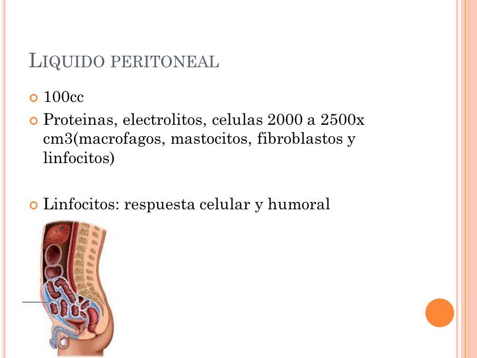 E SPACIO RETROPERITONEAL Espacio virtual Limites pelvianos posteriores: sacro, psoas, musculos piramidales, musculos iliacos y el obturador interno: Limites anteriores: peritoneo parietal posterior