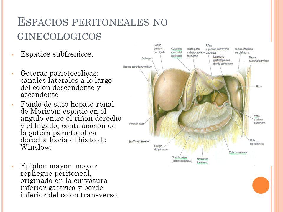 E SPACIOS PERITONEALES GINECOLOGICOS Fondo de Saco de Douglas: espacio ubicado entre el recto en su cara anterior y la cara posterior del utero.