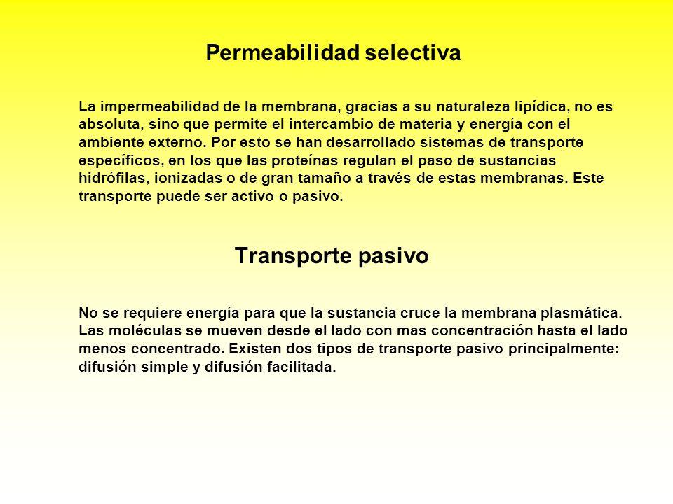 Transporte pasivo No se requiere energía para que la sustancia cruce la membrana plasmática. Las moléculas se mueven desde el lado con mas concentraci