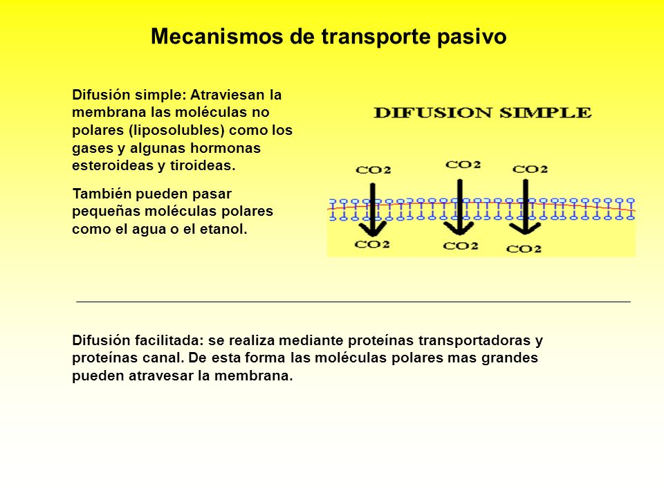 Mecanismos de transporte pasivo Difusión simple: Atraviesan la membrana las moléculas no polares (liposolubles) como los gases y algunas hormonas este