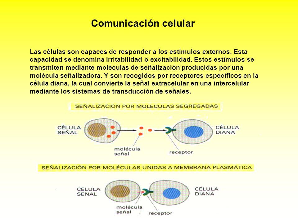 Comunicación celular Las células son capaces de responder a los estímulos externos. Esta capacidad se denomina irritabilidad o excitabilidad. Estos es