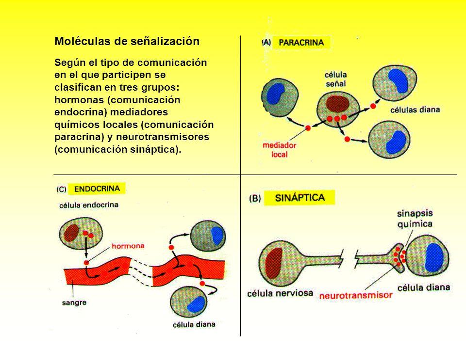 Moléculas de señalización Según el tipo de comunicación en el que participen se clasifican en tres grupos: hormonas (comunicación endocrina) mediadore