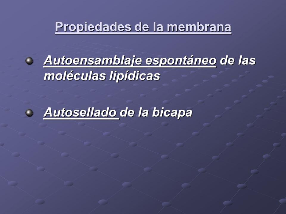 Propiedades de la membrana Autoensamblaje espontáneo de las moléculas lipídicas Autosellado de la bicapa