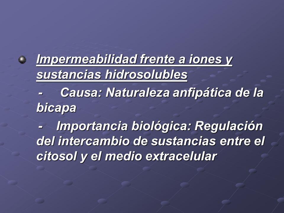 Impermeabilidad frente a iones y sustancias hidrosolubles - Causa: Naturaleza anfipática de la bicapa - Causa: Naturaleza anfipática de la bicapa - Im