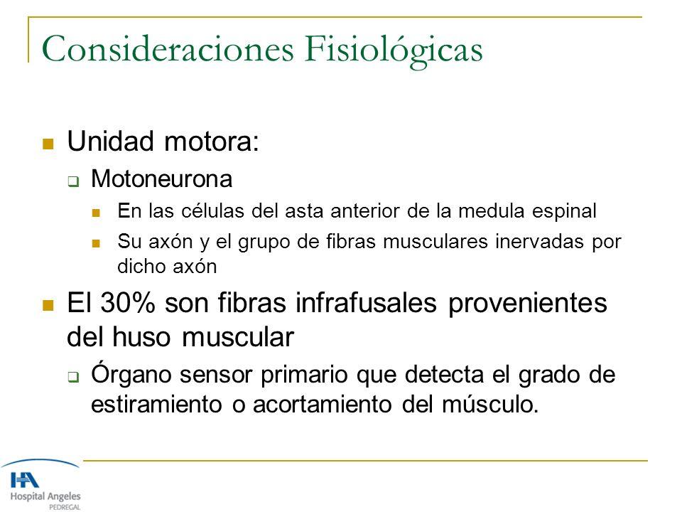 Consideraciones Fisiológicas Unidad motora: Motoneurona En las células del asta anterior de la medula espinal Su axón y el grupo de fibras musculares