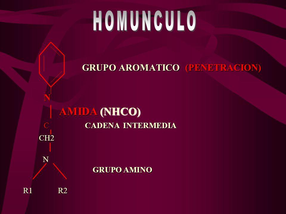 NH H+HO OC NH – C– CH2 NH – C – CH2 H2O AMINA AROMATICA AMINOACIDO HIGADO O