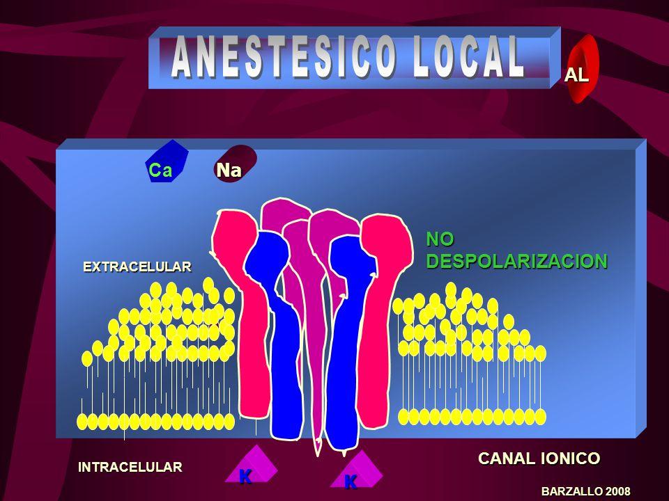 CANAL IONICO BARZALLO 2008 Na K EXTRACELULAR INTRACELULAR Ca DESPOLARIZACION