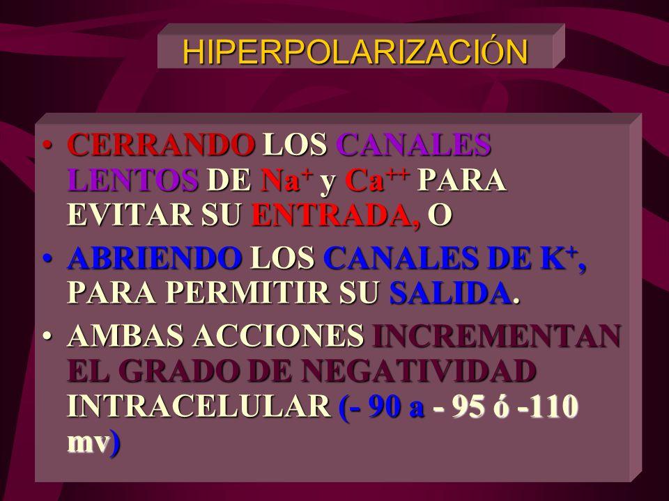 POTENCIALES NEURONALES AXOPLASMA E. EXTRACELULAR Na + K+K+K+K+