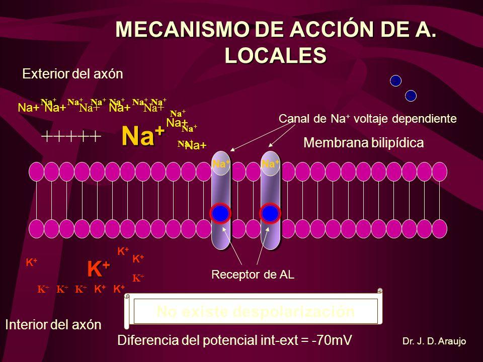 HIPERPOLARIZACI Ó N K+K+K+K+ - 90 mv - 95 mv - 110 mv Ca ++ Na +