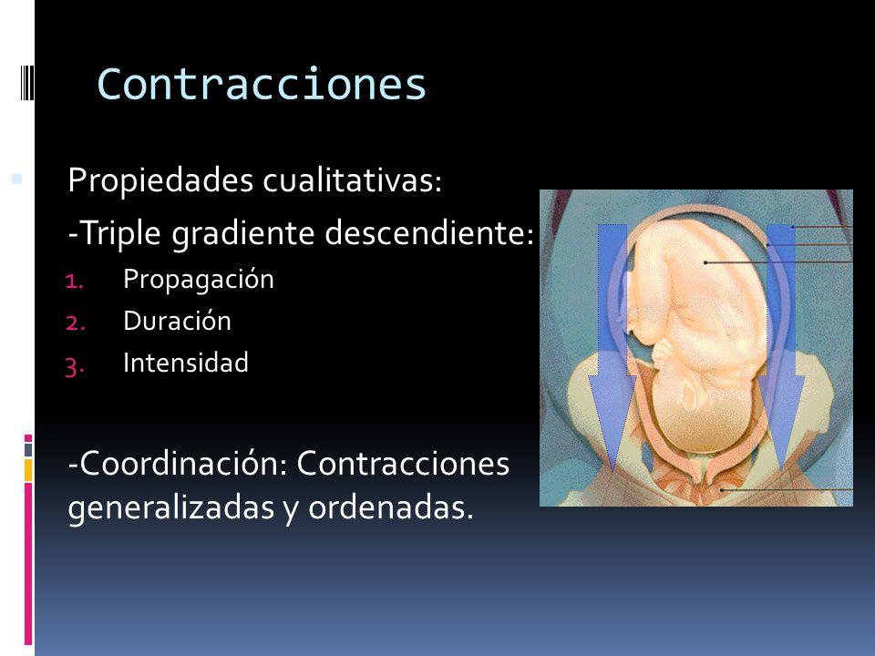 Contracciones Retroacción positiva: Cabeza del feto distiende el cuello del útero, esto estimula la contracción del fondo uterino y esto empuja al feto, lo cual distiende aún más el cervix y se repite este ciclo, aumentando cada vez la intensidad.