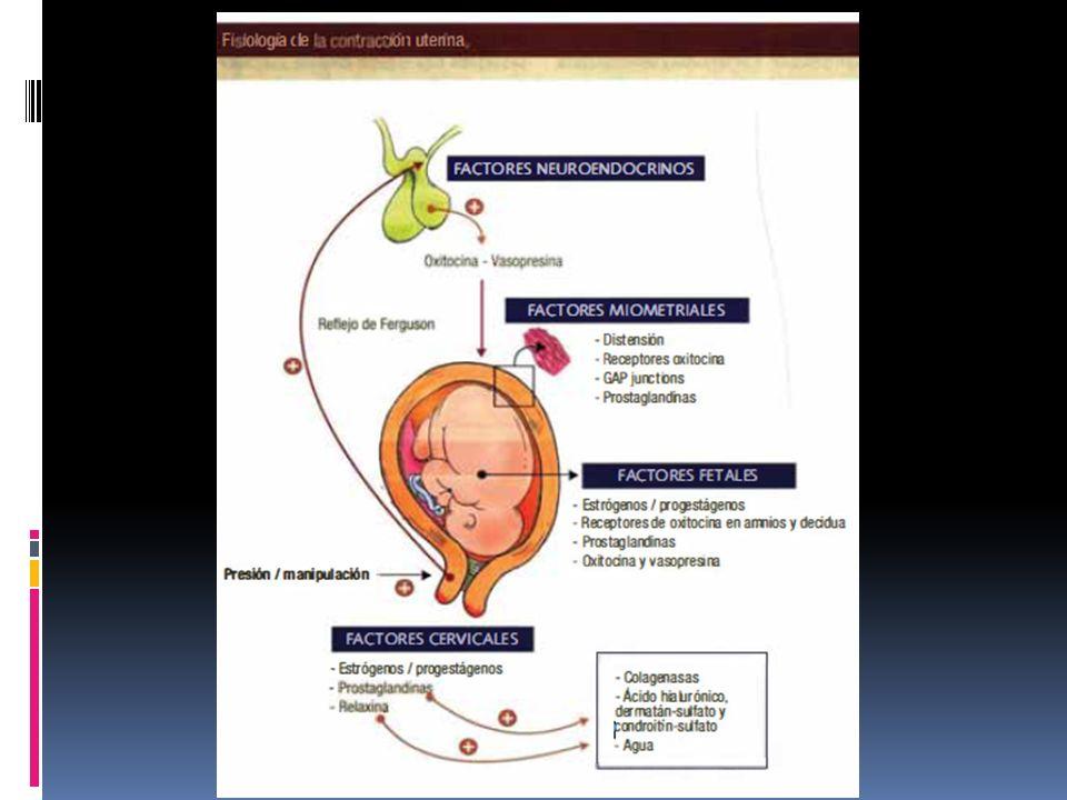 Oxitocina Hormona sintetizada en nucleo supraoptico y paraventricular almacenada en neurohipofisis Se libera en grandes cantidades tras la distensión del cérvix uterino y la vagina durante el parto, así como en respuesta a la estimulación del pezón por la succión del bebé, facilitando el parto y la lactancia.