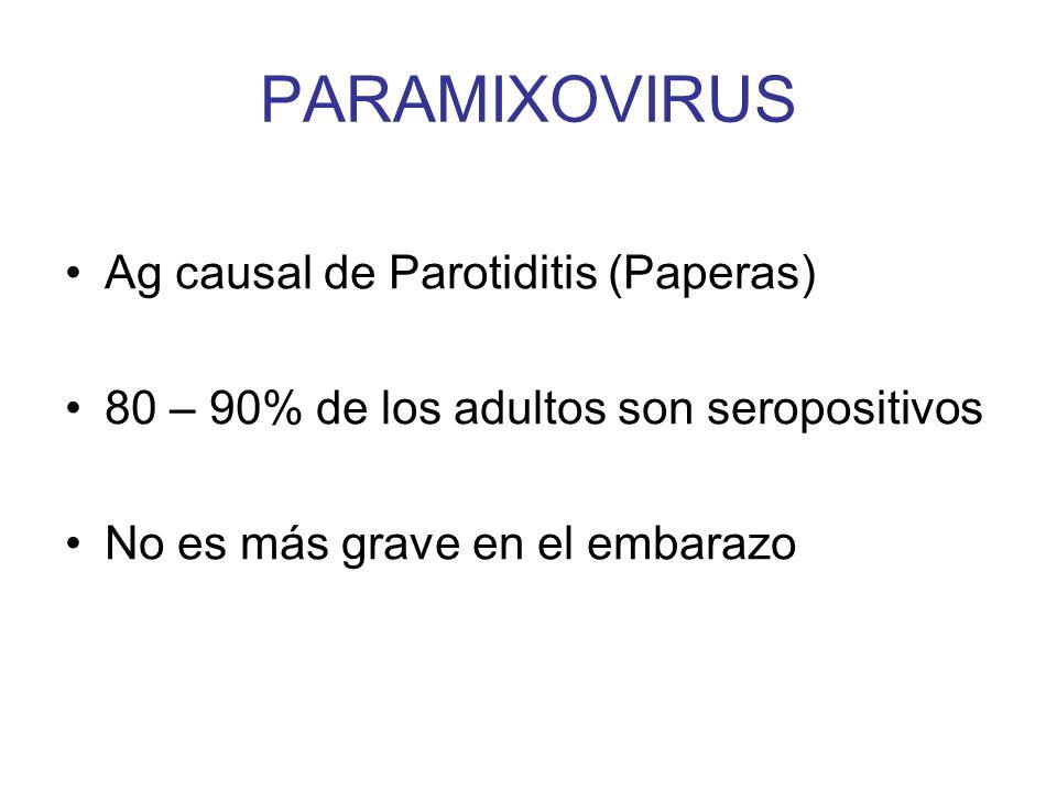PARAMIXOVIRUS Ag causal de Parotiditis (Paperas) 80 – 90% de los adultos son seropositivos No es más grave en el embarazo