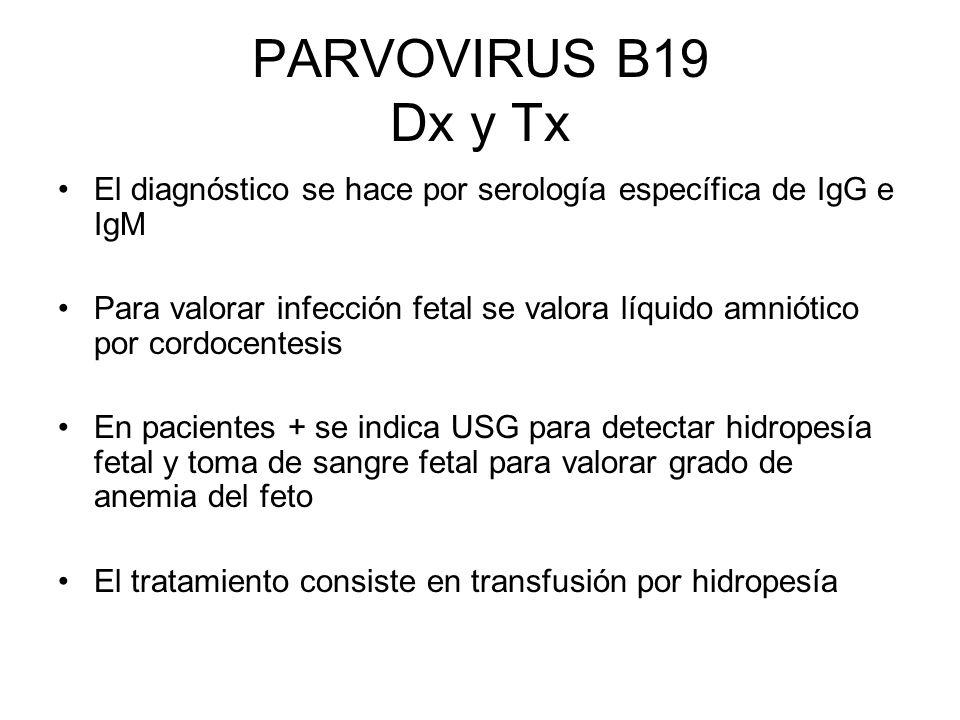 PARVOVIRUS B19 Dx y Tx El diagnóstico se hace por serología específica de IgG e IgM Para valorar infección fetal se valora líquido amniótico por cordo