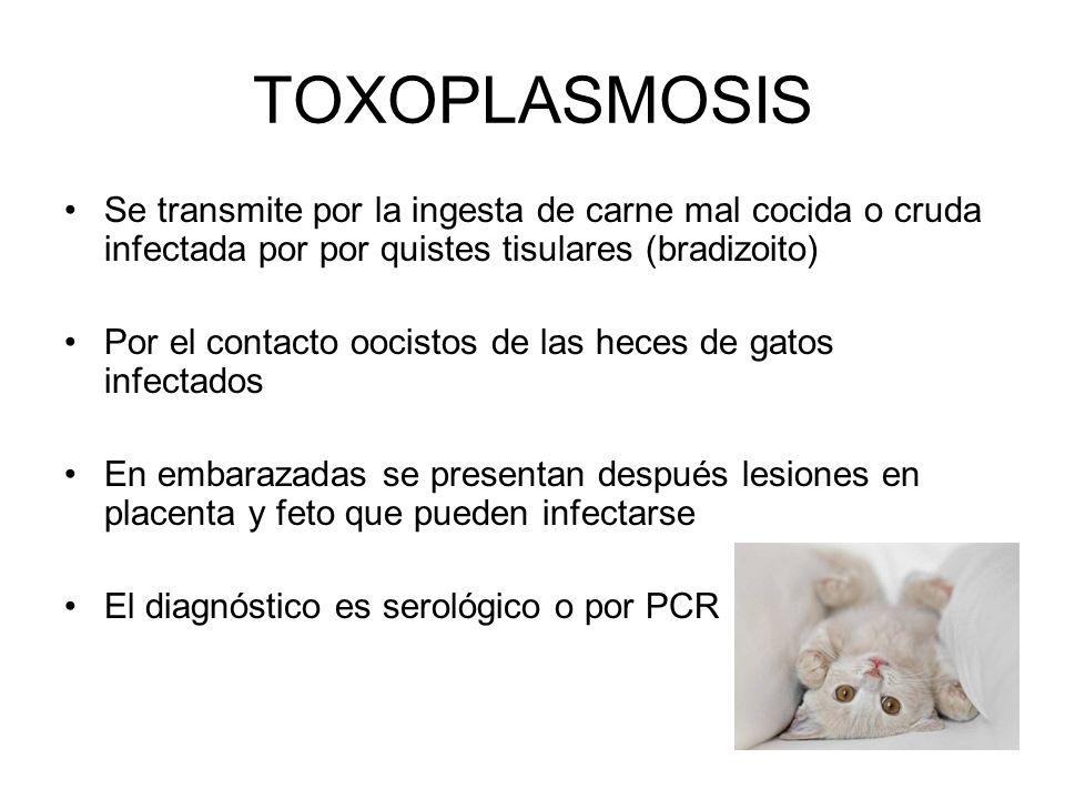 TOXOPLASMOSIS Se transmite por la ingesta de carne mal cocida o cruda infectada por por quistes tisulares (bradizoito) Por el contacto oocistos de las