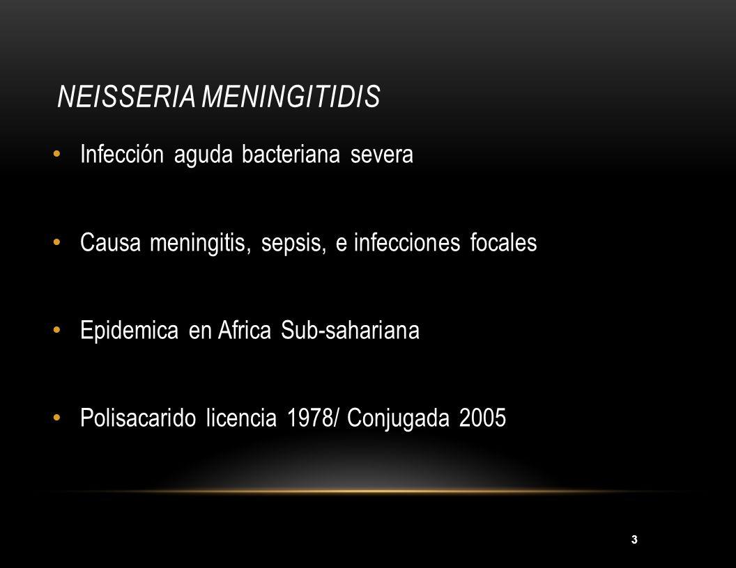 3 NEISSERIA MENINGITIDIS Infección aguda bacteriana severa Causa meningitis, sepsis, e infecciones focales Epidemica en Africa Sub-sahariana Polisacar