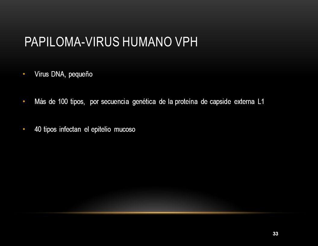 33 PAPILOMA-VIRUS HUMANO VPH Virus DNA, pequeño Más de 100 tipos, por secuencia genética de la proteína de capside externa L1 40 tipos infectan el epi