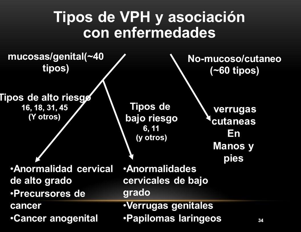 34 Tipos de VPH y asociación con enfermedades No-mucoso/cutaneo (~60 tipos) verrugas cutaneas En Manos y pies mucosas/genital(~40 tipos) Tipos de alto