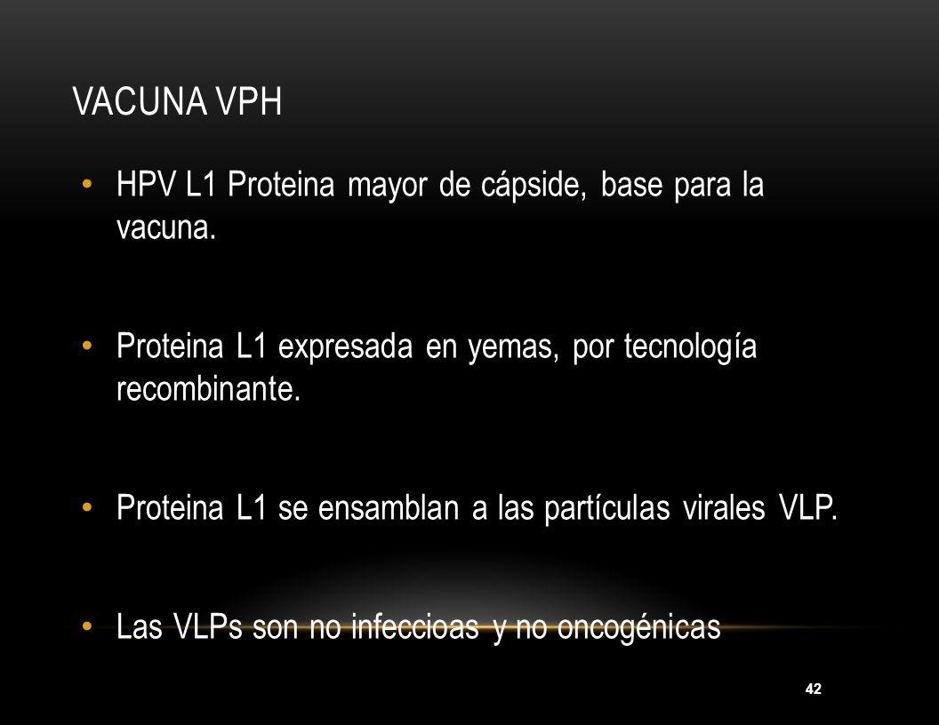 42 VACUNA VPH HPV L1 Proteina mayor de cápside, base para la vacuna. Proteina L1 expresada en yemas, por tecnología recombinante. Proteina L1 se ensam