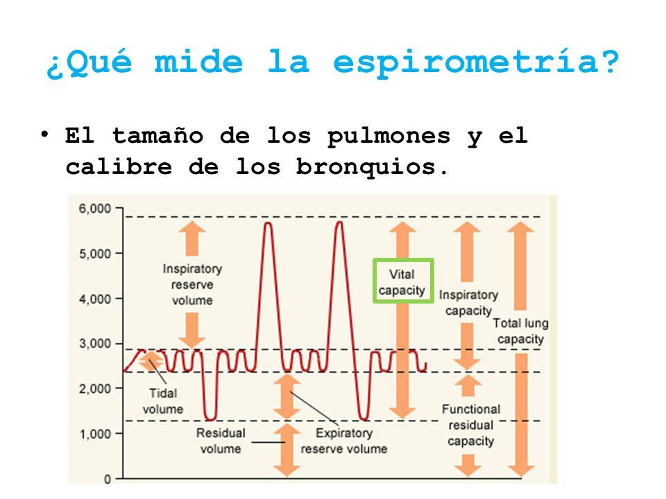 ¿Qué mide la espirometría? El tamaño de los pulmones y el calibre de los bronquios.